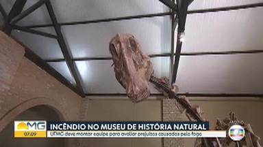 Incêndio causa prejuízo no Museu de História Natural da UFMG - UFMG deve montar equipe para avaliar danos causados pelo fogo