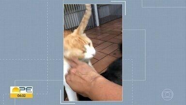 Veterinária faz campanha para cuidar de animais de rua - Alimentos estão fazendo a alegria de cães e gatos de rua.