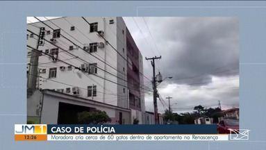 Criação de mais de 60 gatos em apartamento vira caso de polícia em São Luís - Moradores do prédio alegam que não aguentam mais o mau cheiro que sai do apartamento.