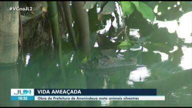 Obra da Prefeitura de Ananindeua ameaça a vida de animais silvestres - Obra da Prefeitura de Ananindeua ameaça a vida de animais silvestres