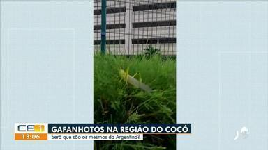 População se assusta com quantidades de gafanhotos no bairro Cocó, em Fortaleza - Saiba mais no g1.com.br/ce