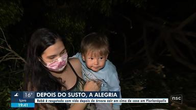 Bebê de 1 ano é resgatado com vida após árvore cair em cima de casa em Florianópolis - Bebê de 1 ano é resgatado com vida após árvore cair em cima de casa em Florianópolis