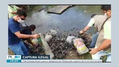 Quatro mil caranguejos são devolvidos ao mangue em Paraty - Animais haviam sido capturados ilegalmente em um mangue em área de proteção ambiental na região do Saco Grande.