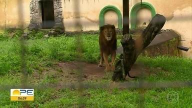 Medidas são adotadas para preservar animais do Parque Estadual de Dois Irmãos - Zoológico está fechado desde março para visitação.