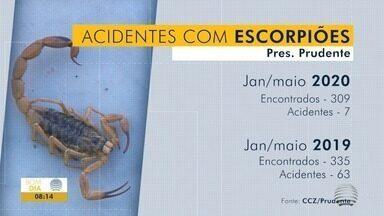 Cai o número de casos de picadas de escorpiões - Contudo, bichos ainda aparecem e cuidados são necessários.