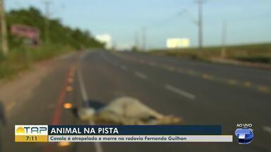Cavalo é atropelado e morre na avenida Fernando Guilhon - Confira.