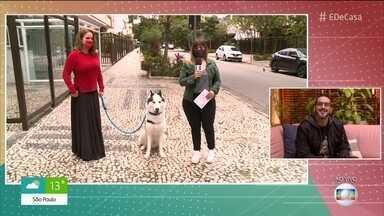 Motoristas de aplicativo trocam de clientela - Profissionais contam que ganham mais transportando cães