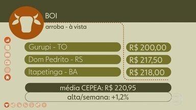 Veja como ficaram os preços do boi gordo - Média CEPEA fechou em alta de 1,2% em São Paulo