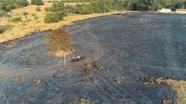 Homem sofre queimaduras de segundo grau após tentar controlar incêndio em Mirassol - Um homem de 67 anos sofreu queimaduras de segundo grau ao tentar controlar um incêndio em vegetação, na tarde desta quarta-feira (15), em Mirassol (SP).