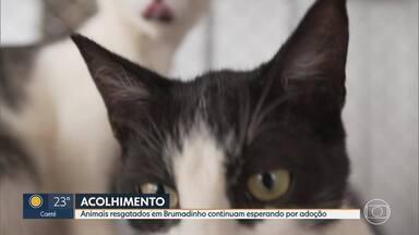 Animais resgatados em Brumadinho continuam disponíveis para adoção. - Em um mês de campanha online foram adotados 46 animais.