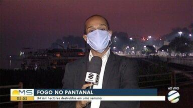 Incêndio no Pantanal já destruiu 34 mil hectares - Incêndio no Pantanal já destruiu 34 mil hectares
