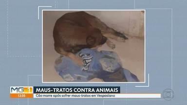 Cachorro morre após ter patas traseiras quebradas e pênis cortado em Vespasiano - De acordo com ONG que prestou o socorro, o animal também apresentava uma fratura na coluna.