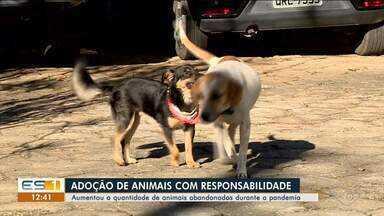 Aumenta quantidade de animais abandonados durante a pandemia em Colatina, no ES - Veja a reportagem.