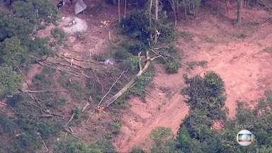 Desmatamento em Mairiporã - Moradores denunciam a derrubada ilegal de árvores