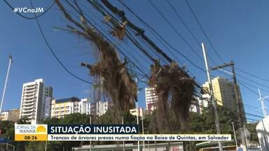 Troncos de árvores presos em fiação oferecem riscos na região da Baixa de Quintas - Os galhos estão pendurados nos cabos e podem causar problemas para quem passa no local.