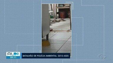 Número de envenenamento de animais em Maceió aumentou 50% desde o começo do ano - Os gatos têm sido as maiores vítimas.