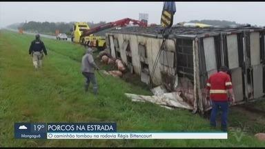 Caminhão com porcos vivos tomba em rodovia de Registro - Veículo tombou na Rodovia Régis Bittencourt, nesta quinta-feira (30).