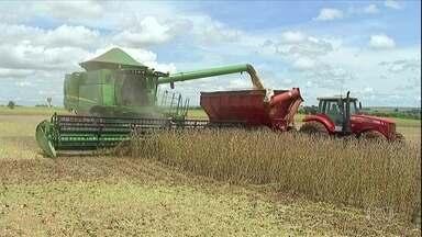 Preço da soja aumenta em Mato Grosso do Sul e anima produtores - Valor da saca chegou a R$ 107,81 na última semana, 58,3% acima do que em igual período de 2019. Porém, agricultores querem negociar preços ainda maiores.