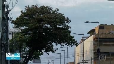 Ventos ficam cada vez mais fortes em agosto, segundo Apac - Meteorologista diz que fenômeno é comum a partir de junho, no Recife