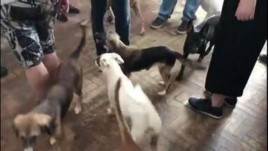 Bom Dia Rio: 40 cães são resgatados em apartamento na Tijuca - Idosa de 66 anos, que seria acumuladora de animais, mantinha os cães em apartamento.