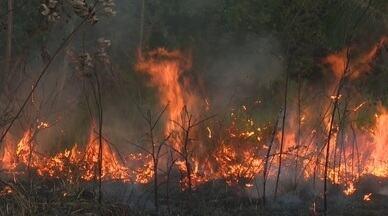 Rio Branco registra mais de 2,6 mil queimadas urbanas em 2020 - Rio Branco registra mais de 2,6 mil queimadas urbanas em 2020