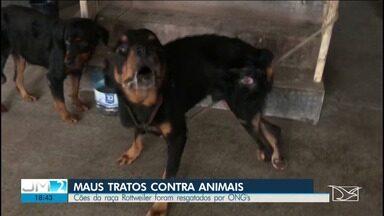 Cães da raça Rottweiler são resgatados por ONG's em prédio abandonado de São Luís - Quem fez o resgate, diz que viviam em péssimas condições e poderiam ter morrido.