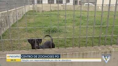 Praia Grande faz campanha de adoção de animais pela internet - Novos cãezinhos estão disponíveis para adoção.
