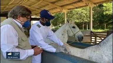 Cavalos podem produzir anticorpos mais potentes do que de pacientes curados pela Covid-19 - Pesquisadores da UFRJ, FAPERJ e do Instituto Vital Brasil descobriram que cavalos podem desenvolver anticorpos contra o coronavírus até 100 veze mais potentes do que o produzido pelo plasma de pacientes recuperados de Covid-19.