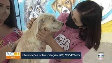 Entenda o que é necessário para adotar um animal de estimação - Ter um bichinho significa, acima de tudo, ter responsabilidade.