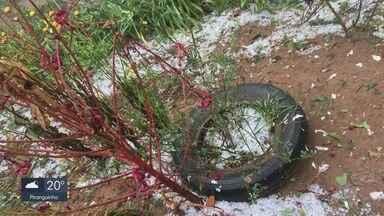 Granizo deixa prejuízos em plantações de cidades atingidas no Sul de MG - Granizo deixa prejuízos em plantações de cidades atingidas no Sul de MG
