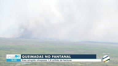 Área atingida por queimadas no Pantanal ultrapassa 1,8 milhão de hectares - Área atingida por queimadas no Pantanal ultrapassa 1,8 milhão de hectares