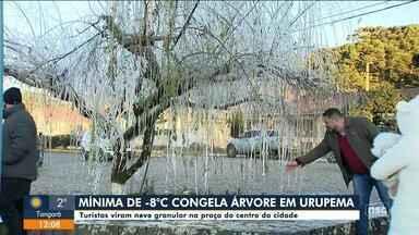 Temperatura mínima de -8ºC congela árvore em Urupema - Temperatura mínima de -8ºC congela árvore em Urupema