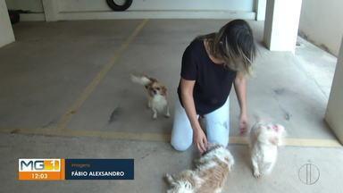 Campanha de vacinação antirrábica começa neste sábado (22) em Montes Claros - Cães e gatos a partir dos três meses precisam tomar a vacina. E claro que os donos de animais tem esse dever de cuidar do bem estar e assegurar a saúde dos pets.