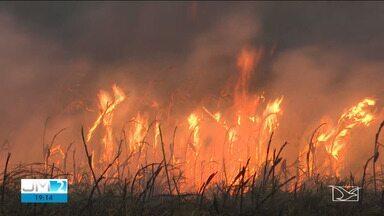 Incêndio atinge área de quilombo em Parnarama - O tempo seco e os ventos fortes fazem aumentar a incidência de queimadas.