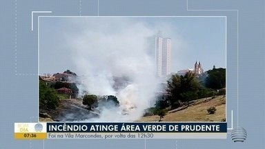 Área verde é atingida por incêndio na Vila Marcondes - Bastante fumaça se espalhou pelo bairro.