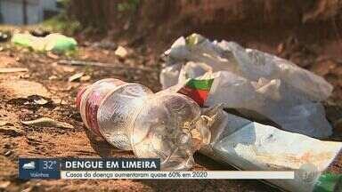 Casos de dengue em Limeira têm aumento de pelo menos 60% em 2020 - Mais de 1,6 mil moradores tiveram a doença neste ano.
