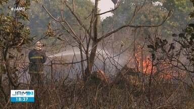 Amazonas sofre com aumento do desmatamento - Amazônia ocupa o 2º lugar no ranking de queimadas, de acordo com o Inpe