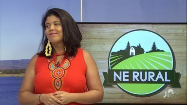 Marina Cavalcante canta Fausto Nilo - Saiba mais em: g1.com.br