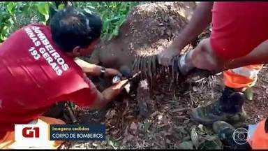 Bombeiros resgatam égua atolada em brejo e fazem parto de potrinho - A ocorrência foi no bairro São Bernardo, na Região Norte de Belo Horizonte, na tarde dessa segunda-feira (7).