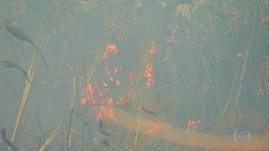 Fogo no Pantanal destrói o equivalente a 10 vezes as cidades do Rio e de São Paulo juntas - O fogo já destruiu mais de 2,3 milhões de hectares do Pantanal e, apesar de ocupar um território maior em Mato Grosso do Sul, é o vizinho, Mato Grosso, que tem a maior área destruída.