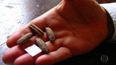Cientistas cultivam tâmaras a partir de sementes da época de Jesus Cristo - Nos anos 1960, arqueólogos encontraram sementes ancestrais durante escavações no deserto da Judeia, no Sul de Israel. Foi agora que cientistas decidiram tentar cultivá-las e, para surpresa deles, as sementes germinaram e deram tâmaras.