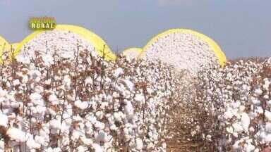 Parte 1: Colheita do algodão inicia em Vilhena, RO - A cada safra, estado tem produção maior.