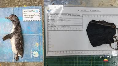 Pinguim foi encontrado morto com máscara dentro da barriga - Confira as informações.