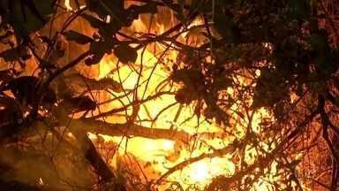 Governo federal reconhece estado de calamidade em Mato Grosso - O fogo já destruiu mais de 1,7 milhão de hectares em Mato Grosso.