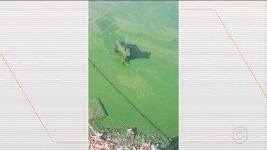 Mancha verde cobre parte da Represa Billings, em São Paulo - Pesquisadora alerta que a mancha é tóxica e pode levar à mortandade de peixes e provocar problemas à saúde das pessoas.
