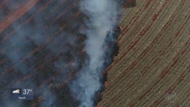 Número de queimadas no inverno já é o maior em 10 anos, aponta Inpe - Chuva pode melhorar situação neste fim de semana.