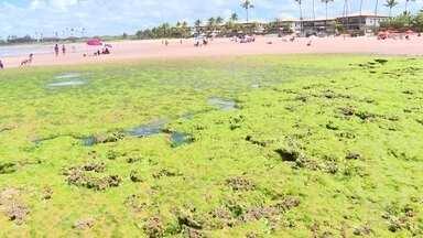 Biodiversidade marinha da Bahia ainda sofre efeitos do vazamento de óleo em 2019 - Biólogos mapearam os danos provocados pelo vazamento de óleo que atingiu o litoral brasileiro no ano passado.