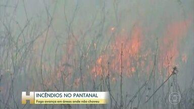 Força Nacional já iniciou combate aos incêndios no Pantanal de Mato Grosso - Equipes da Força Nacional começaram a combater incêndios no Pantanal de Mato Grosso. A chuva dos últimos dias amenizou a situação, mas o fogo ainda avança em locais onde não choveu, como em Porto Jofre.