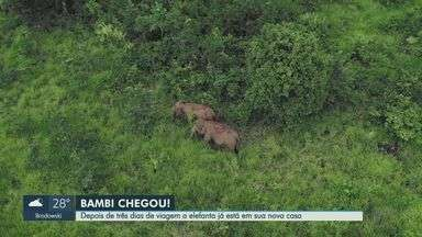 Após 3 dias de viagem, elefanta Bambi chega a santuário no Mato Grosso - Animal vivia no bosque de Ribeirão Preto (SP).