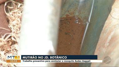 Mutirão em Sinop realiza combate ao mosquito Aedes Aegypti - Mutirão em Sinop realiza combate ao mosquito Aedes Aegypti